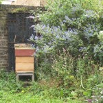 queens-park-garden