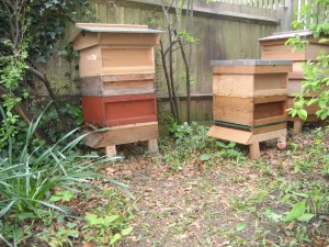National and WBC hives