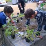 boysplanting