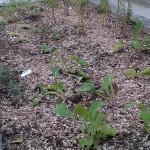 plantsmulched