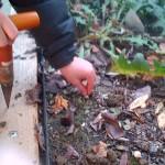plantingbulbs