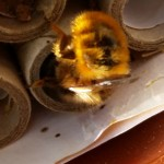solitarybee21