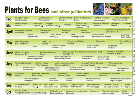 Plantsforbeesa4 01g plants for bees and other pollinators mightylinksfo